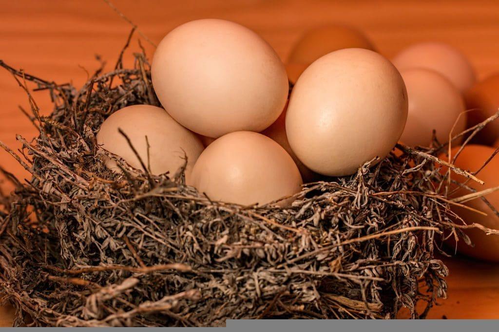 황색 계란
